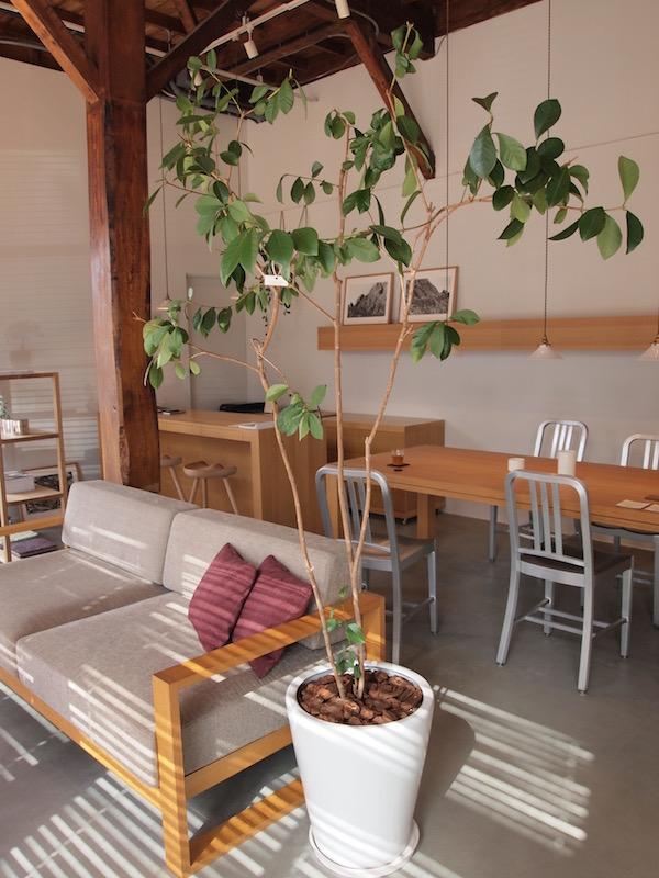 リビングインテリア植物写真