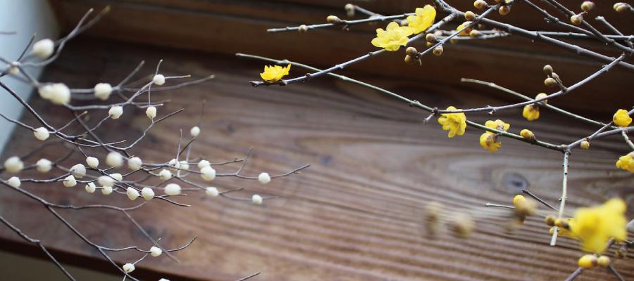 季節の木写真