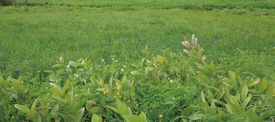 野原の写真